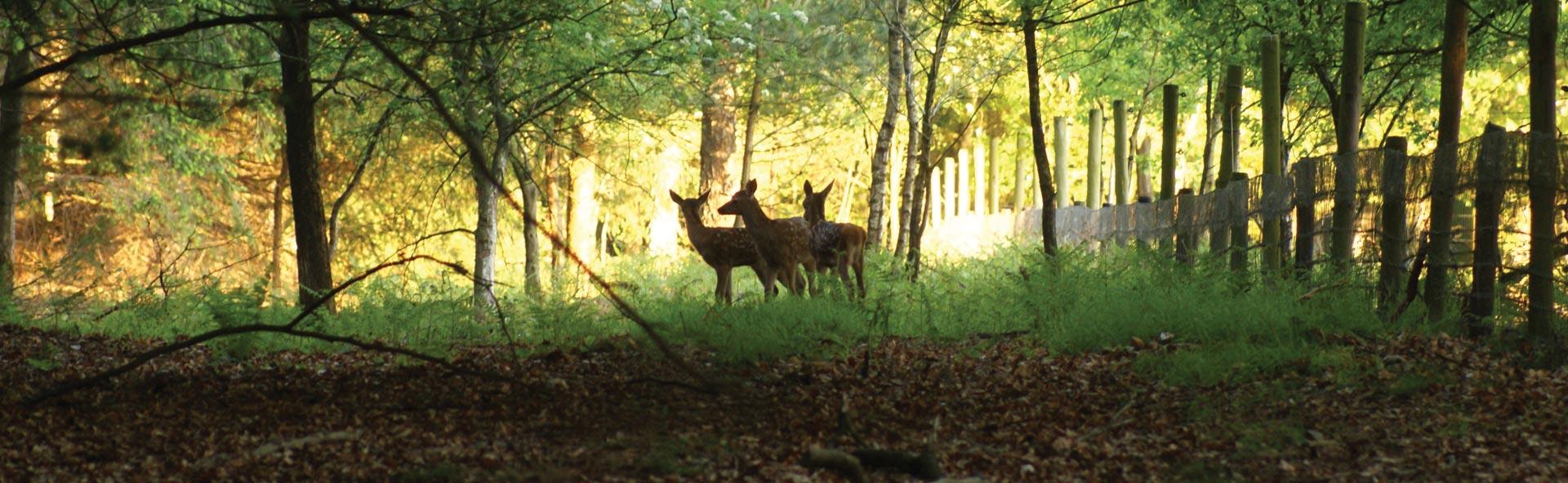 nationale-park-pas-utrechtse-heuvelrug-april-20151