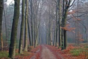 prattenburgse-bos